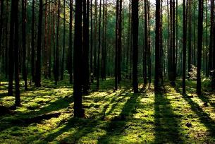 Lasy w okolicy Sielpi