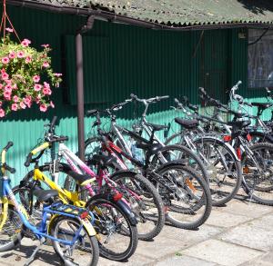Wypożyczalnia rowerów w Sielpi